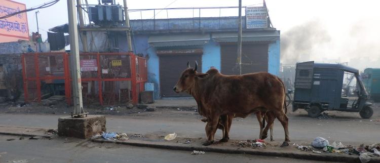 Frühmorgendlicher Spaziergang durch Delhi. Foto: Marta Wrona